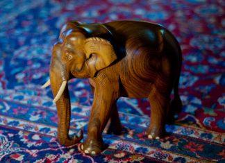Elefanten i rommet!  Om demokratiske kostnader og konsekvenser: Vil vanstyre spare kostnader i fremtiden?